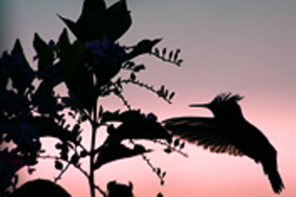 Schiebepuzzle: Nr. 170: Kolibri
