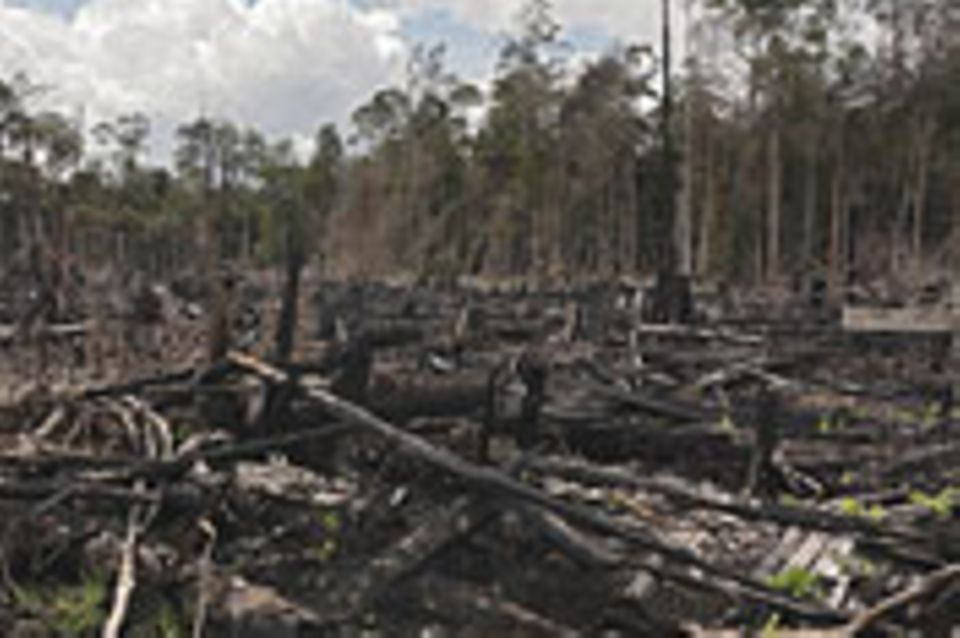 Umweltkatastrophe Palmöl