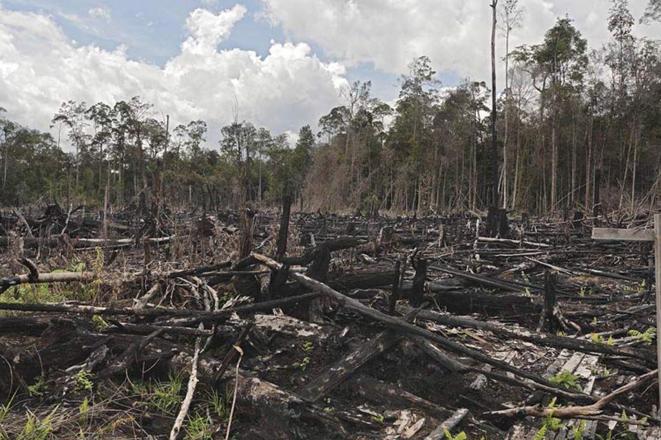 Erst der Wald, dann das Klima: Die Zerstörung des Regenwaldes hat für unser Klima verheerende Konsequenzen