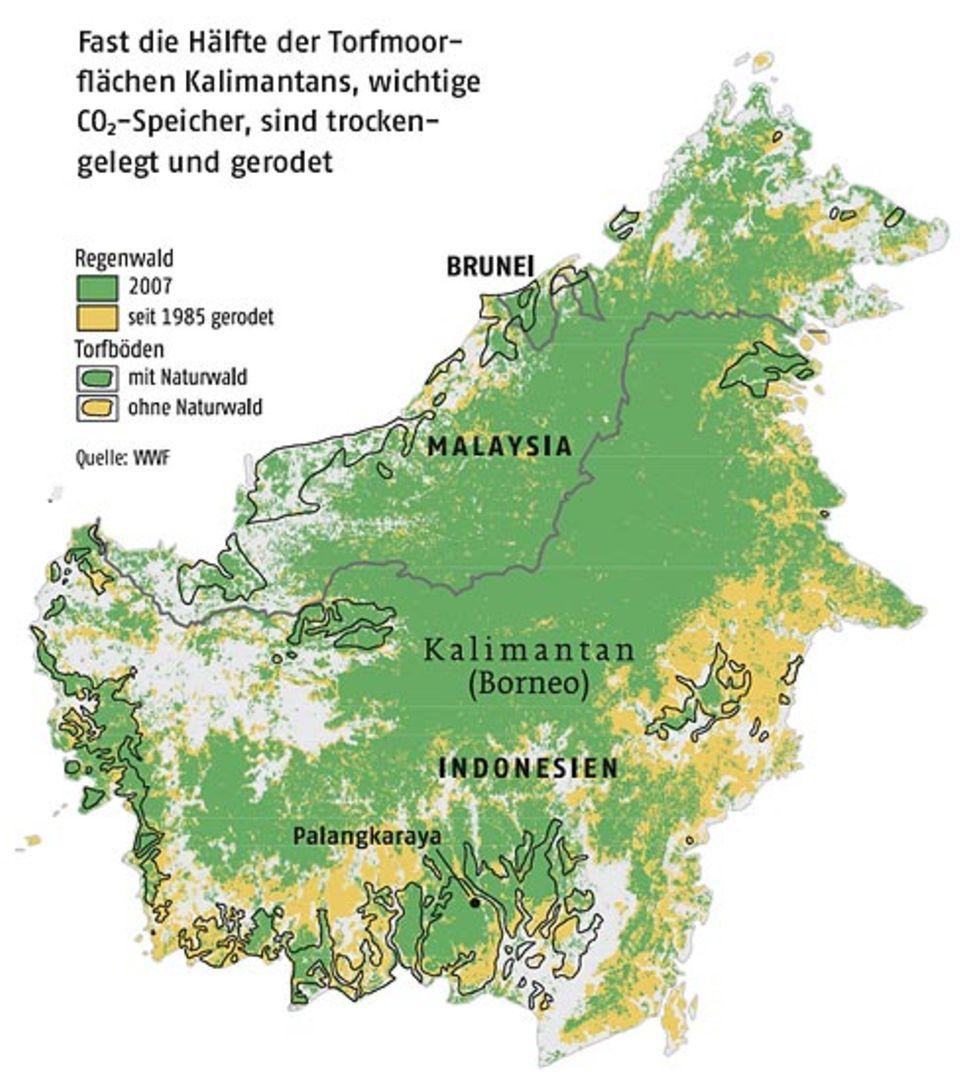 Fast die Hälfte der Torfmoorflächen Kalimantans, wichtige CO2-Speicher, sind trockengelegt und gerodet
