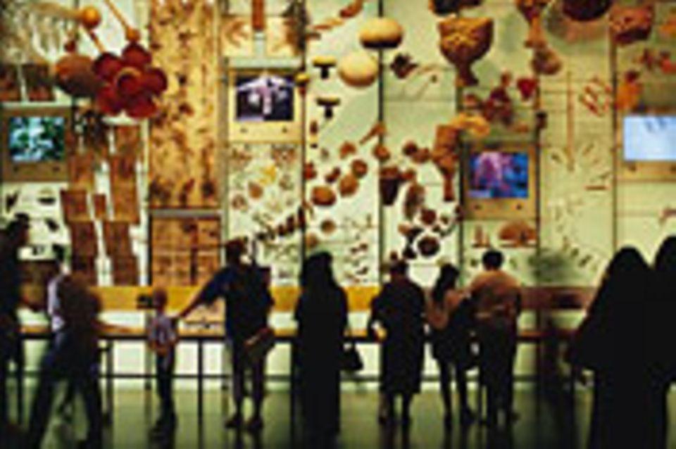 Biodiversität: Schopenhauers Arche