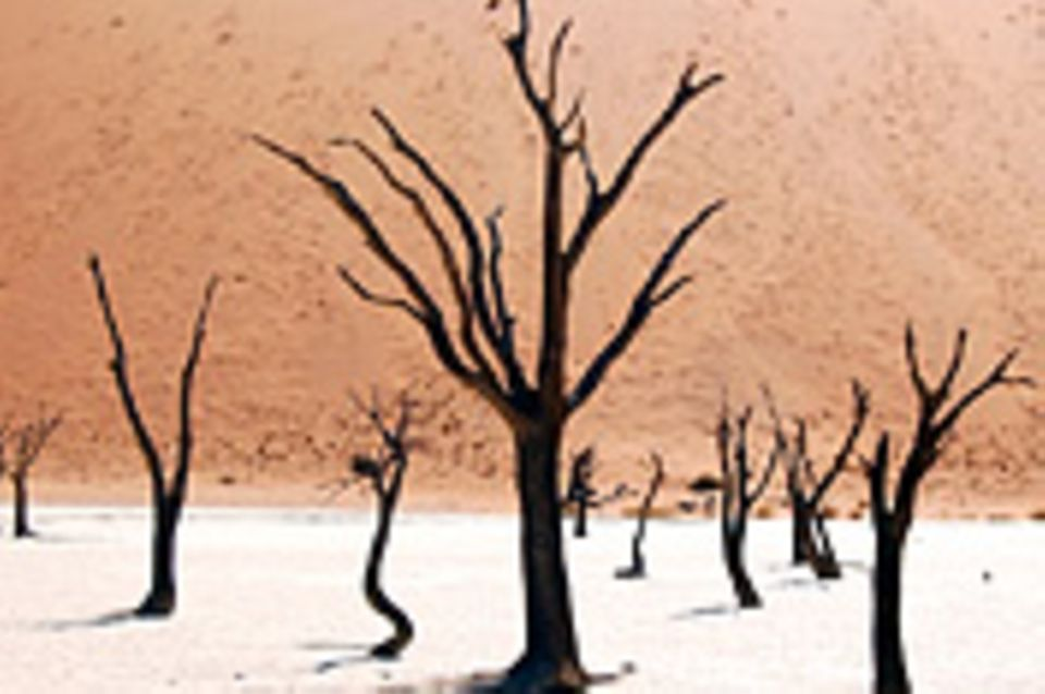 Schiebepuzzle: Nr. 181: Dead Vlei in Namibia
