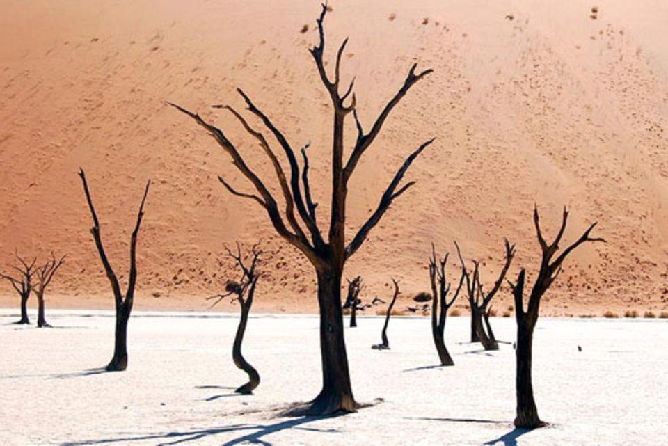 Nr. 181: Dead Vlei in Namibia
