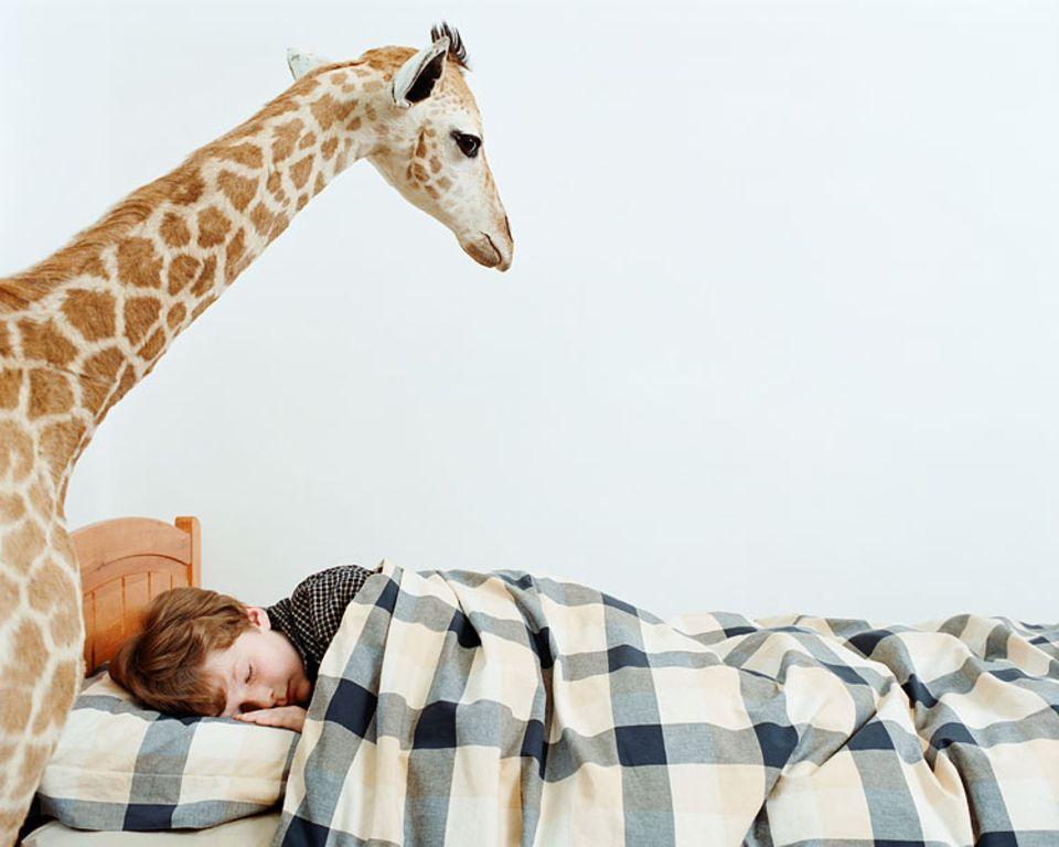 Schlaf: Obwohl wir nachts mehrere Träume haben, erinnern wir uns oft nur noch an einen Traum