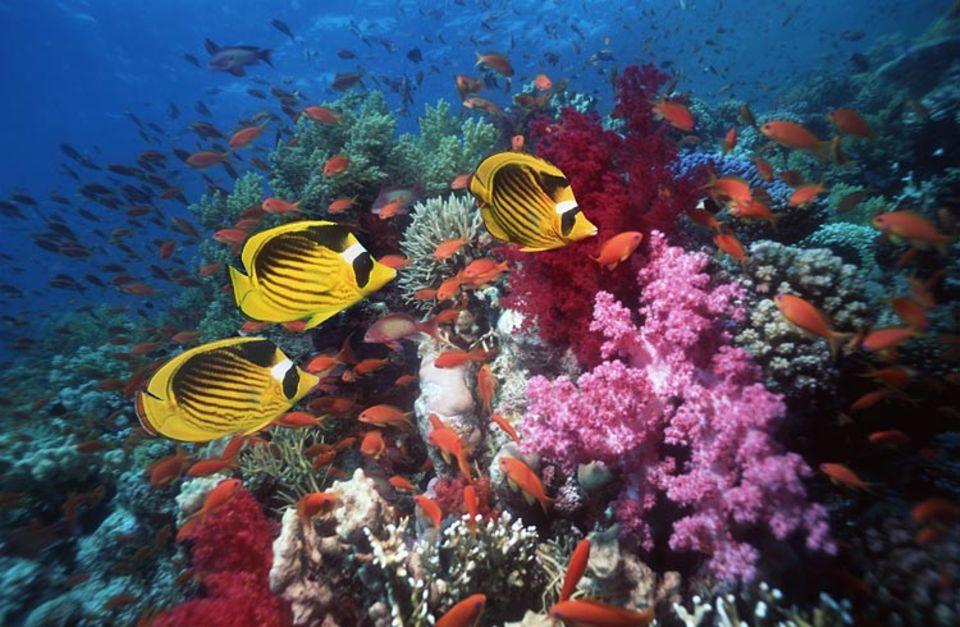 Artenvielfalt im Korallenriff