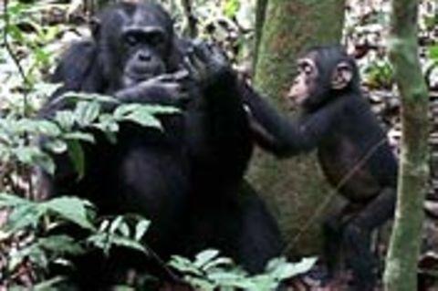 Verhalten: Hilfsbereite Affen