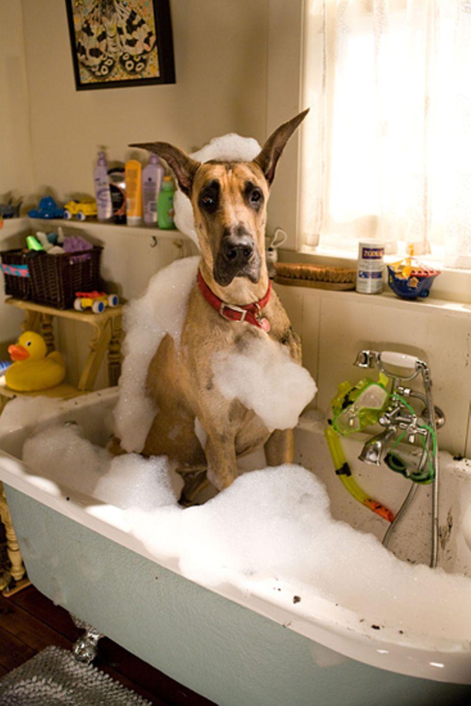 Marmaduke richtet überall Chaos an - sogar in der Badewanne