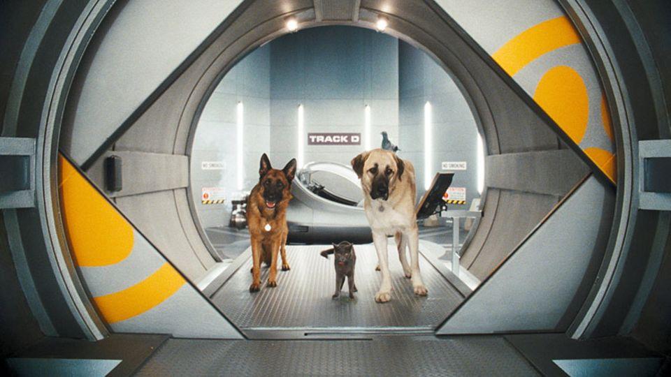 Top Dog, Cool Cat und Alpha Dog auf ihrer Mission.