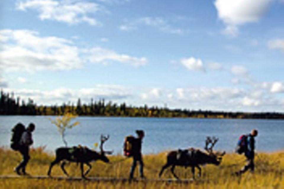 Lappland: Rein in den Trott!