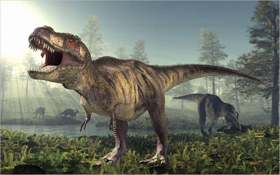 Ab ihrem 14. Lebensjahr wuchsen Tyrannosaurier so schnell, dass man fast dabei zuschauen konnte. Zwei Kilogramm nahmen sie pro Tag zu