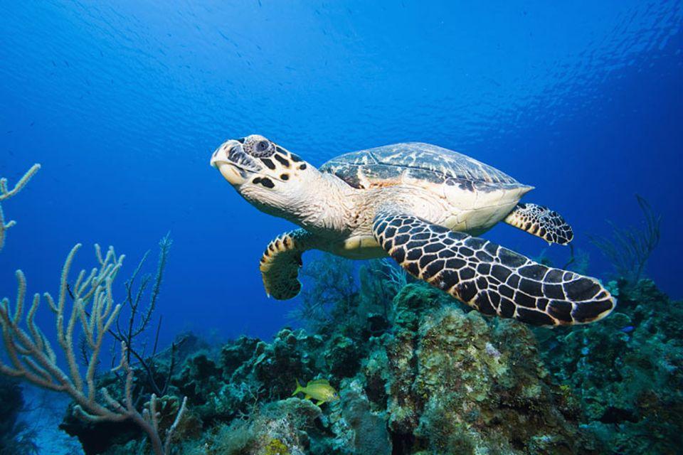 Tierschutz: Hoffnung für die Schildkröten