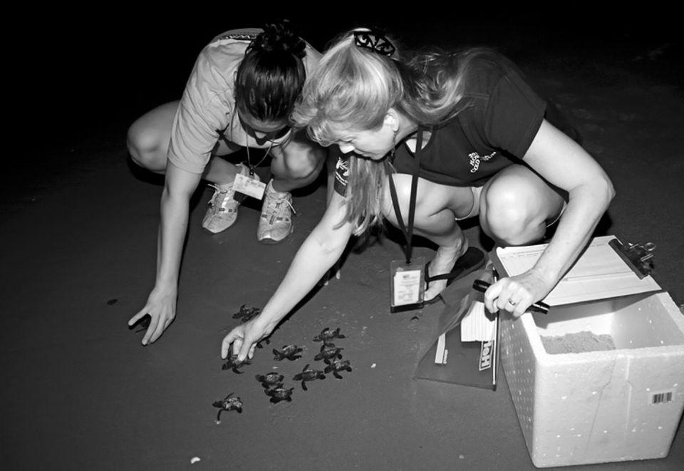 Tierschutz: Auf ins Leben: Biologin Jane Provancha und eine Kollegin setzen die Schildkrötenjungen am Strand des Atlantischen Ozeans in die Brandung