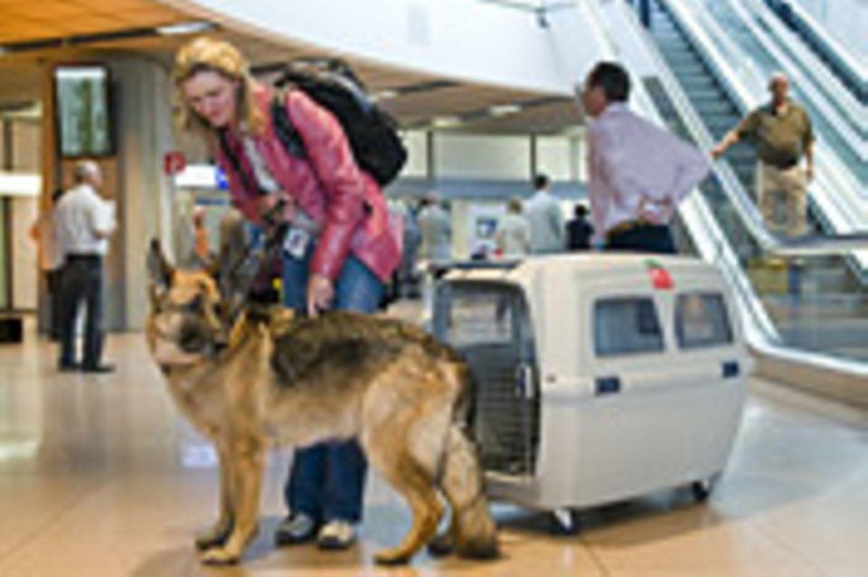 Fliegen: Mit Hund im Flieger: Frachtgut mit vier Beinen