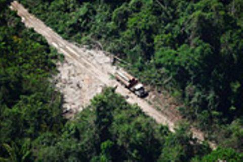 Naturschutz: Brasilien: Die Entdeckung von Grün und REDD