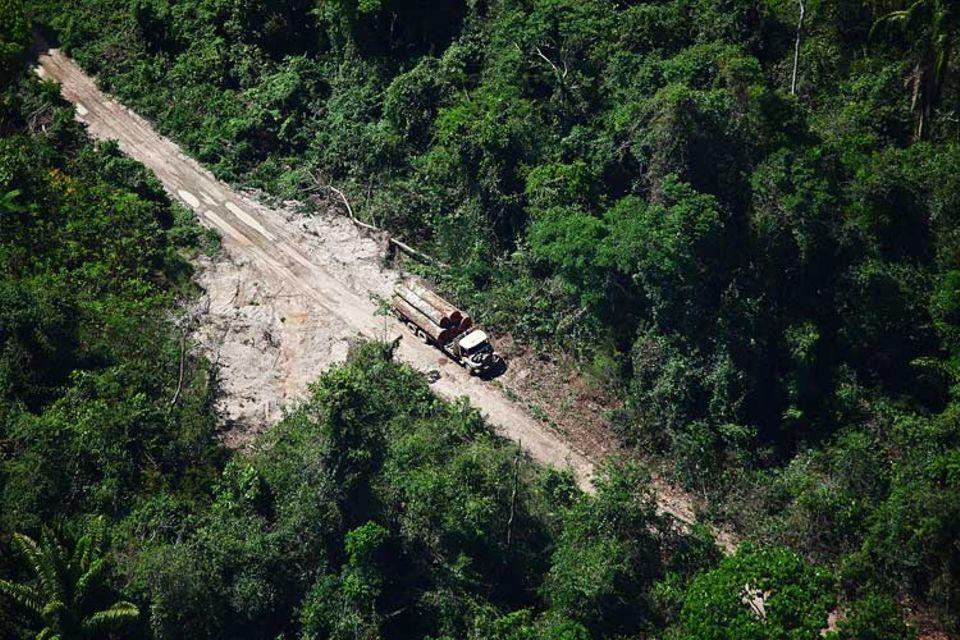 Naturschutz: Aufzuhalten: Die Abholzung des brasilianischen Regenwaldes