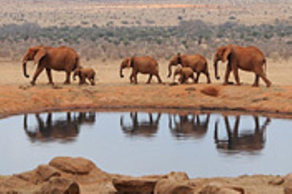 Schiebepuzzle: Nr. 261: Elefanten