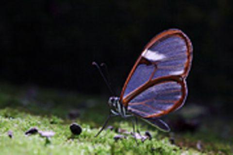 Schiebepuzzle: Nr. 267: Schmetterling