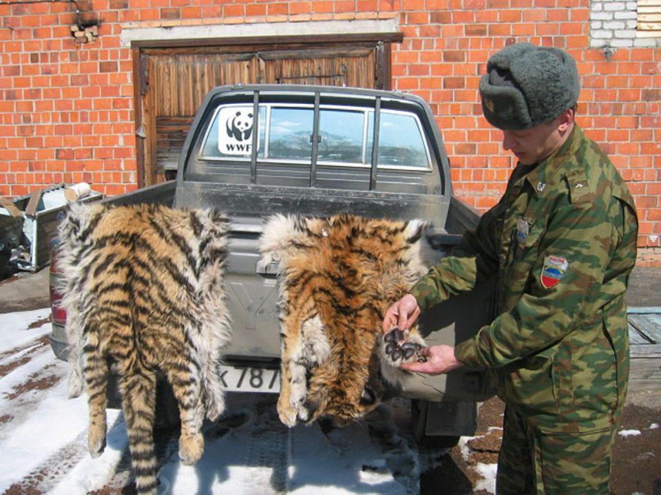 Artenschutz: Diese Tigerfelle wurden bei Wilderern gefunden.