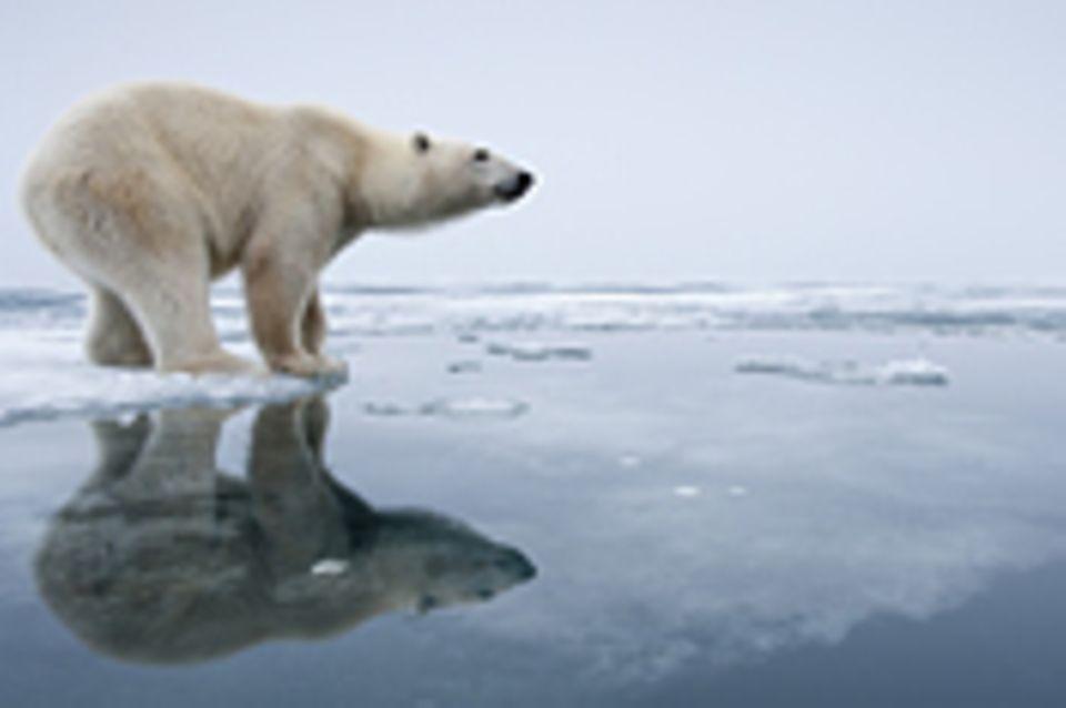Interview: Das mediale Klima