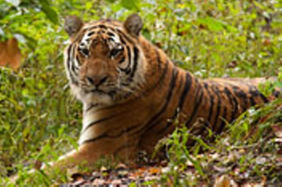 Artenschutz: Was bleibt vom Jahr der Artenvielfalt?