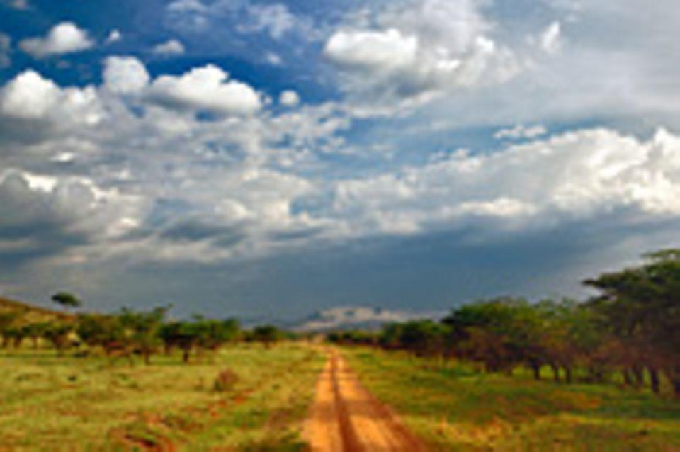 Naturschutz: Serengeti - bedrohte Ikone