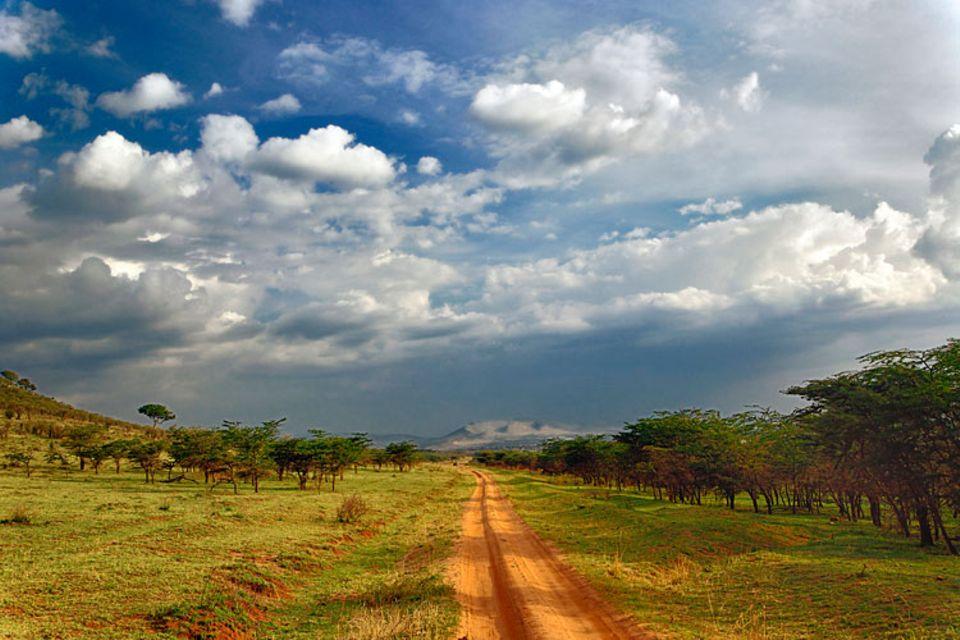 Naturschutz: Schotterpiste statt Highway im Serengeti-Nationalpark