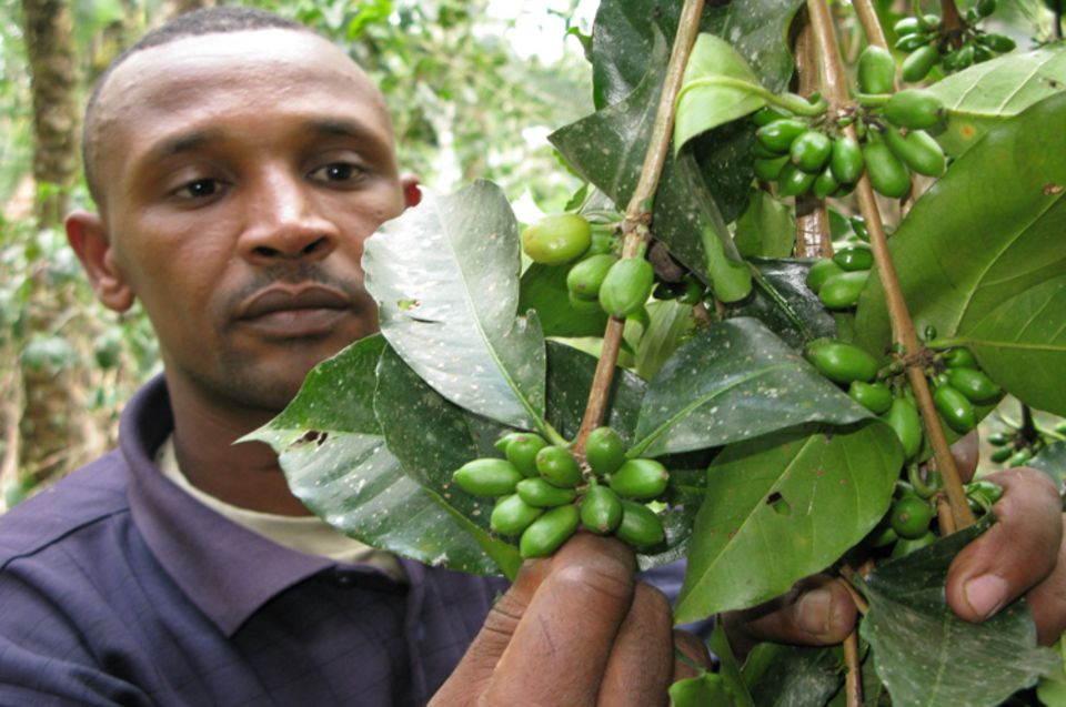 Promotion of market access and improved benefits for local products (e.g. coffee; cocoa)