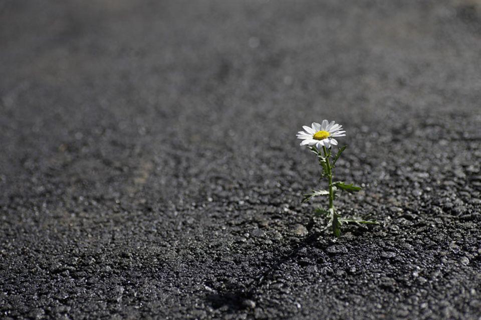 Straßen: Die neue Recyclingtechnik für Asphalt könnte unsere Straßen zukünftig grüner machen