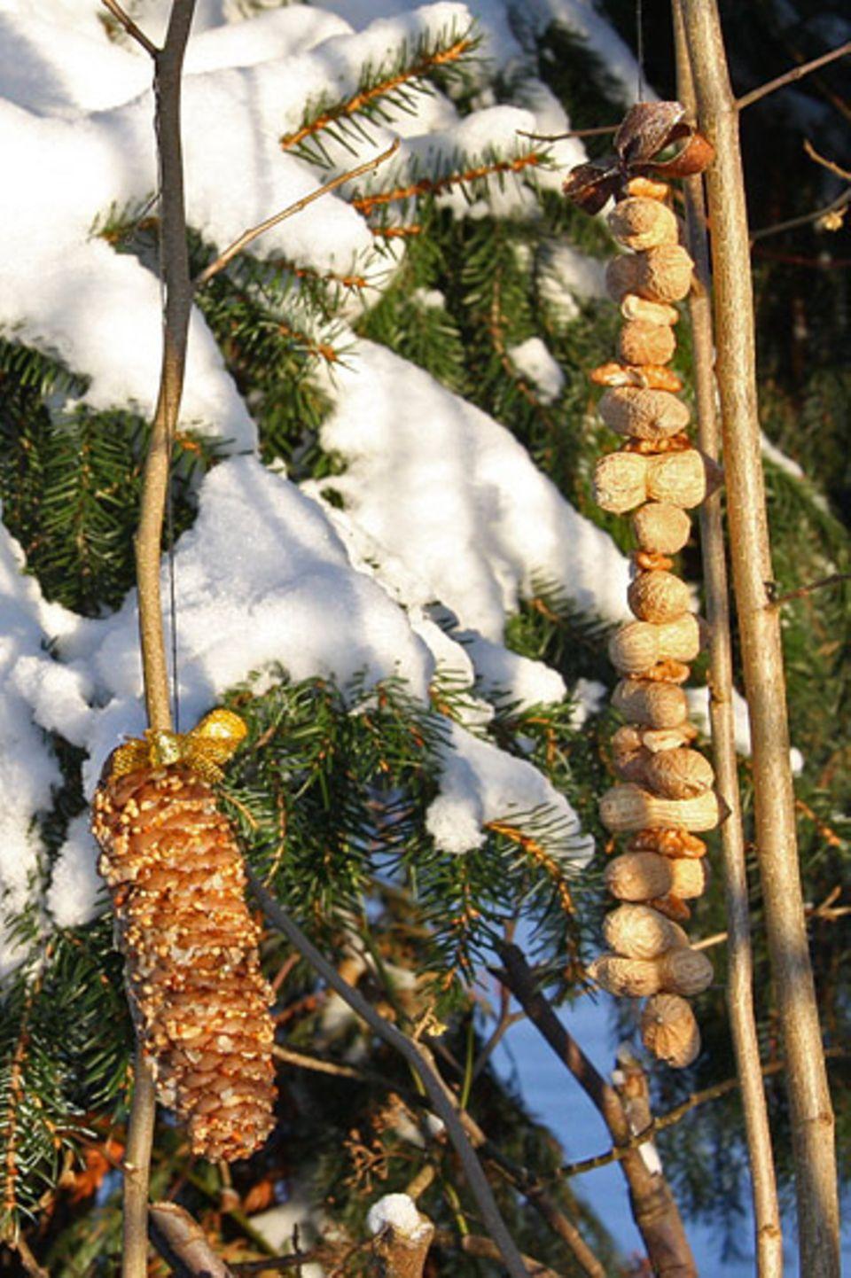 Natur: Frisch bestückte Vogelrestaurants: Futterzapfen und Nusskette.