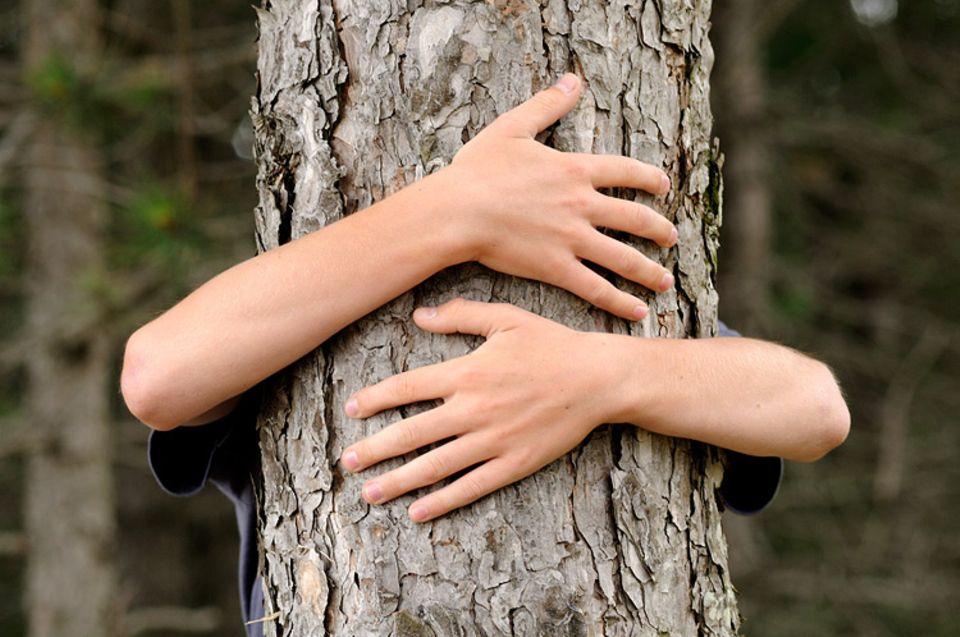 Waldzustand: Mein Freund, der Baum