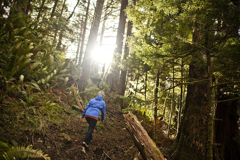 Waldzustand: Die Sonne, die frische Luft, der Wald lädt zu langen Spaziergängen ein