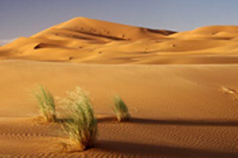 Schiebepuzzle: Sahara