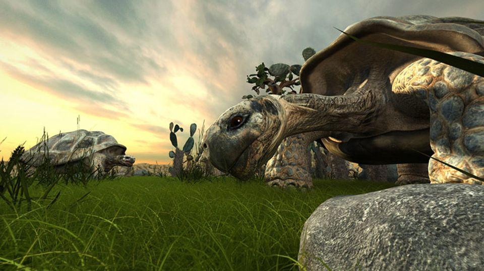 Natur: Eine Riesenschildkröte auf den Galápagos-Inseln