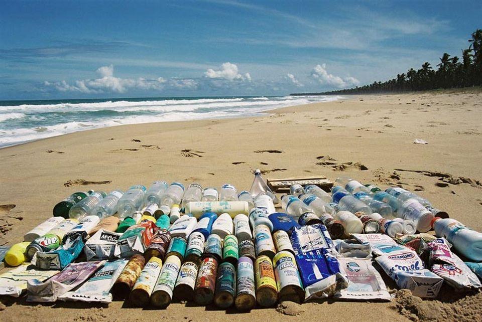 Grüne Palme: In Bahias einsamen Buchten findet Barretto auch Meeresmüll aus Deutschland