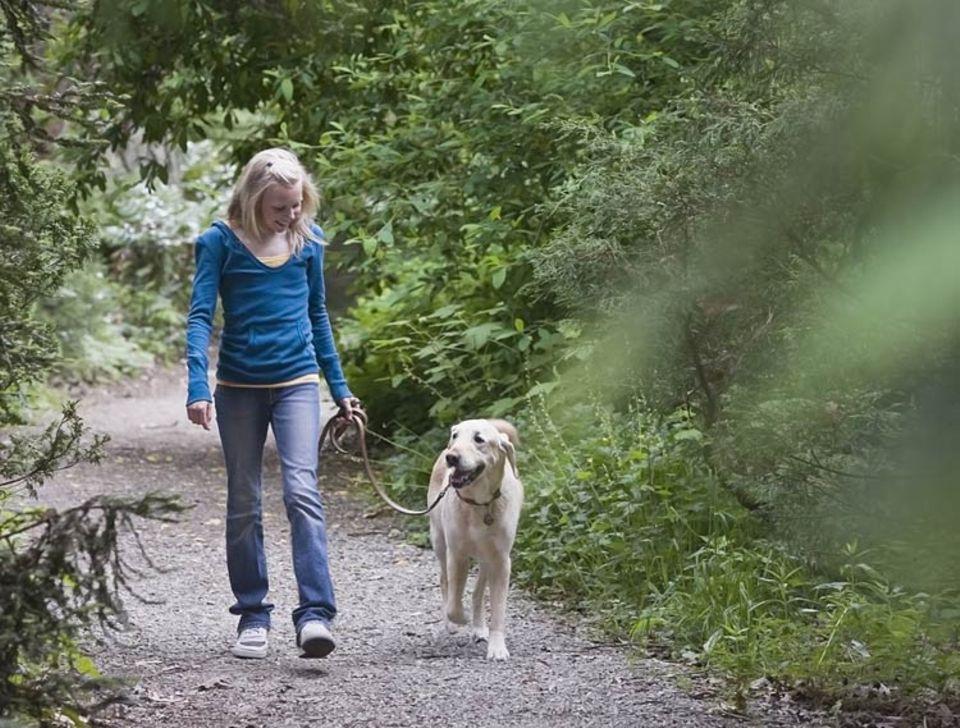 Mensch: Hunde aus dem Tierheim genießen einen Waldspaziergang