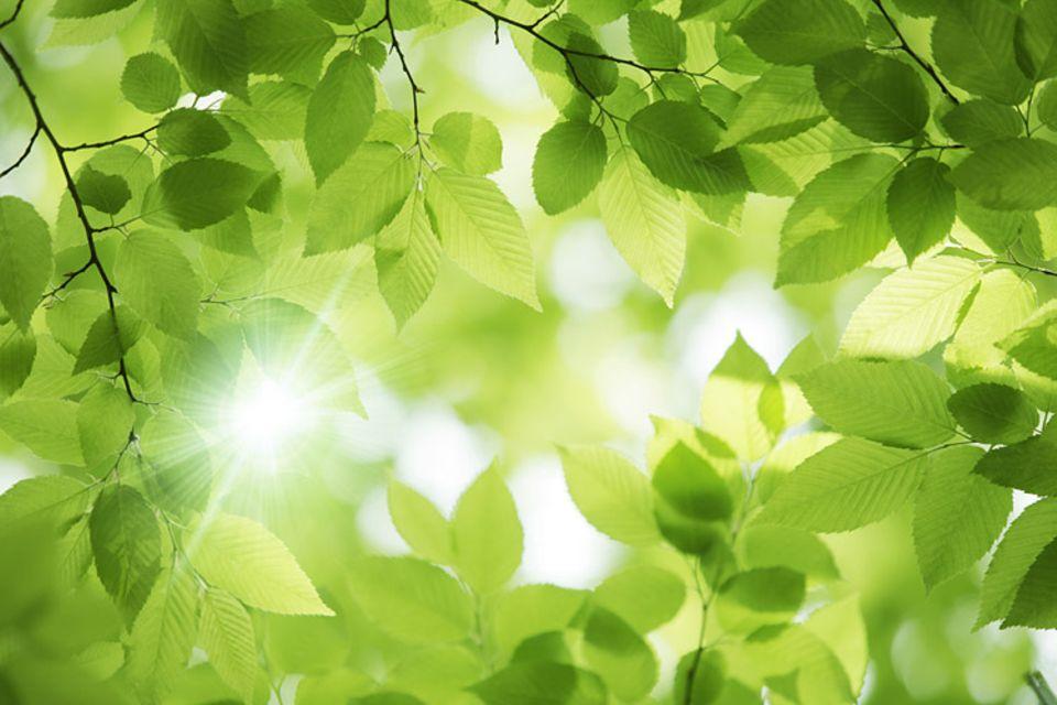 Ein Lichtblick: Ökologische Erfolge motivieren Menschen besser für den Umweltschutz