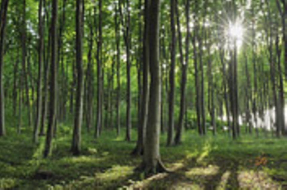 Ökologie: Wald aus dem Rhythmus