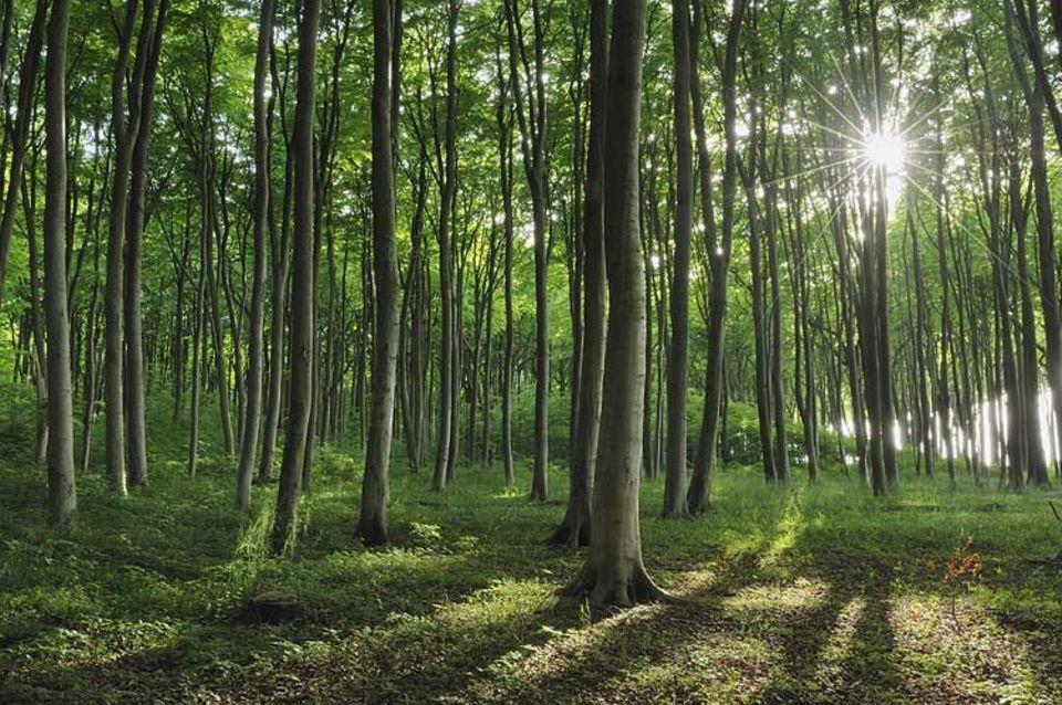 Ökologie: Die ersten Sonnenstrahlen im Jahr sind für viele Waldpflanzen überlebenswichtig