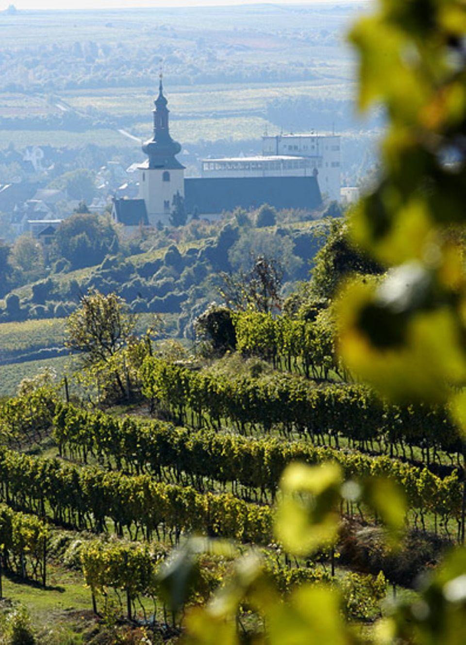 """Viel Landschaft, viel Wein - und mittendrin das malerische Nierstein, das sich selbst """"RieslingCity"""" nennt"""