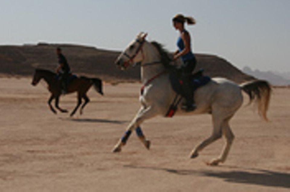 Jordanien, Dynastie der Pferde