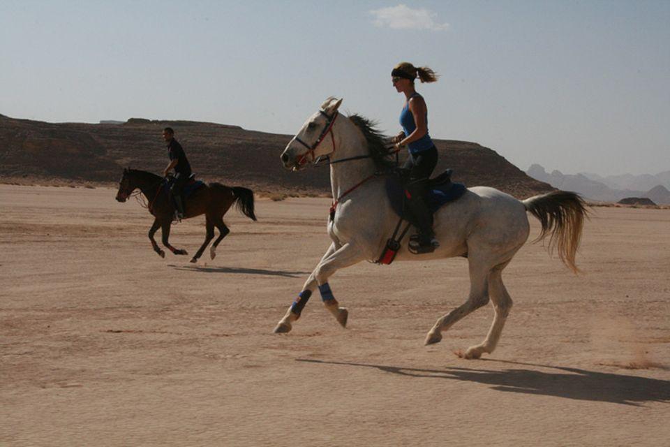 In der Königsfamilie hat man sich auf Langstrecken-Rennen spezialisieret. Für die Ausbildung der Pferde zeichnet eine Frau verantwortlich, die Spanierin Maite Melgosa Minguez