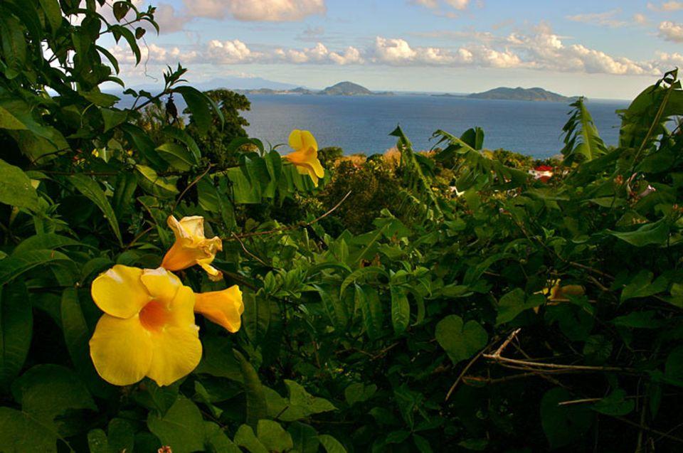 """Guadeloupe wurde im Jahre 1493 von Kolumbus entdeckt. Bei den Einheimischen hieß die Insel """"Karukéra"""" - """"Insel der schönen Wasser"""""""