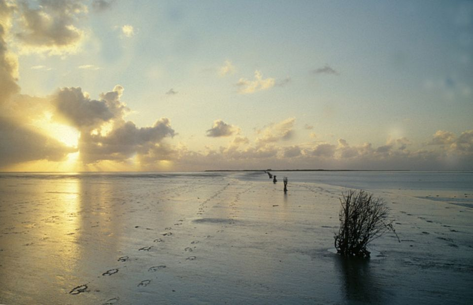 Umweltschutz: Bei Ebbe sind die drei Inseln Neuwerk, Scharhörn und Nigehörn auf Wattwegen zu erreichen