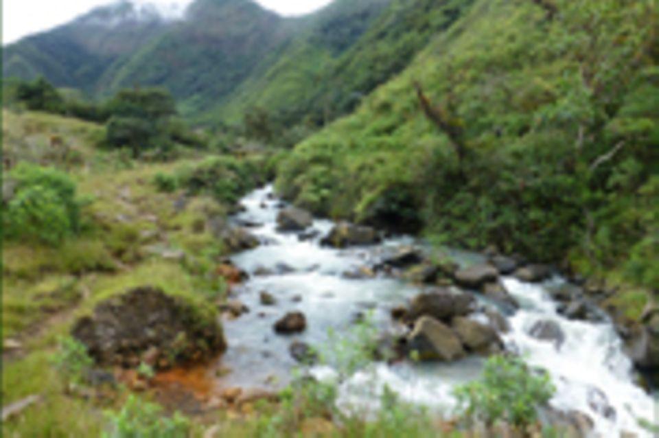 Ecuador: Aufforstung im Wassereinzugsgebiet Irubí, Intag