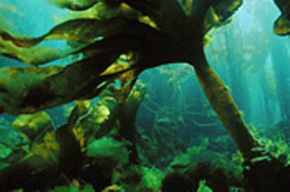 Algen: Was Sie über Algen wissen sollten