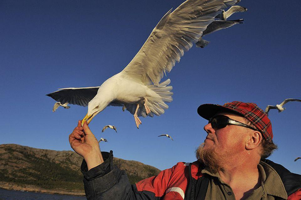 """Ole Martin Dahle, dem """"Adlermann"""", fressen die Möwen mittlerweile aus der Hand"""
