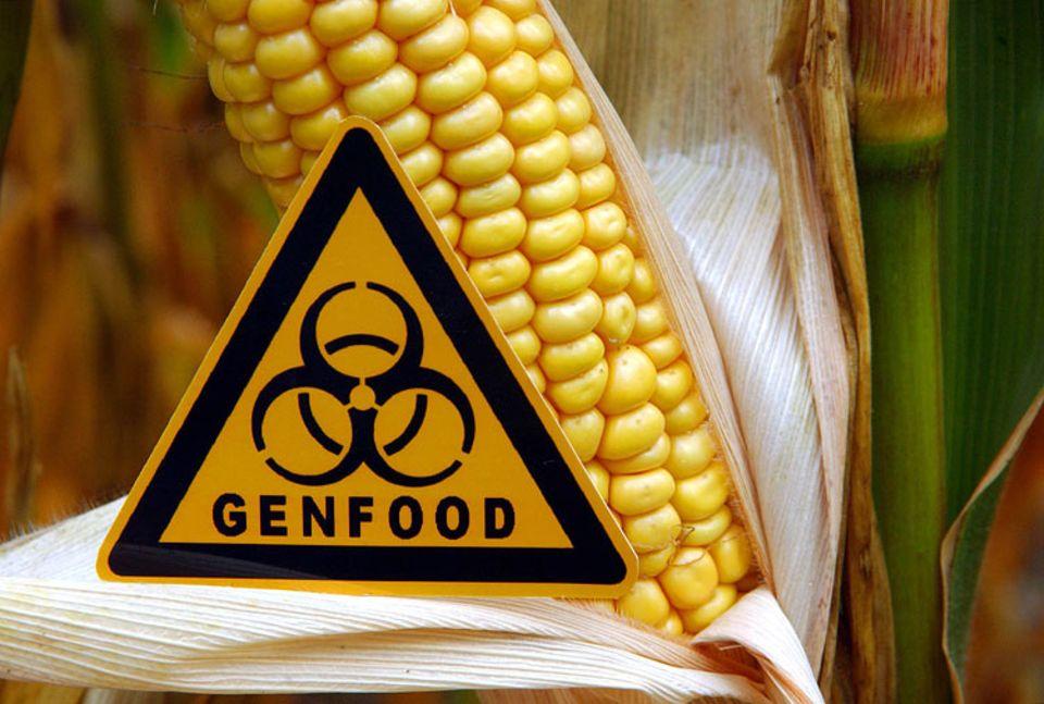 Gen-ethisches Netzwerk: Seit 2009 ist der Anbau des gentechnisch veränderten Mais MON 810 in Deutschland verboten. Deutsche Verbraucher lehnen Genfood mehrheitlich ab