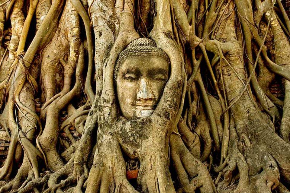 Thailand: Eine Stadt mit Geschichte: Der Steinbuddha ist tief in die Baumwurzeln eingewachsen