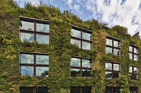 Gartenkunst: Natur an die Wand!