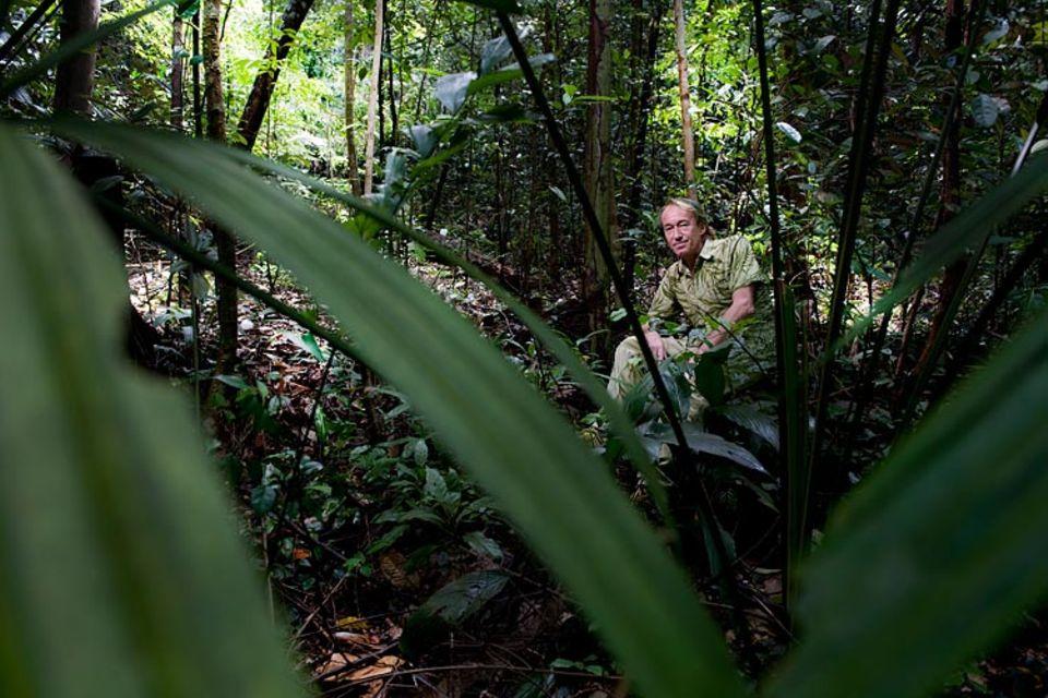 Gartenkunst: Auf der Suche nach geeigneten Gewächsen für seine grüne Wand zieht es Blanc immer wieder in die Wildnis - etwa ins Bukit Tima Nature Reserve in Singapur